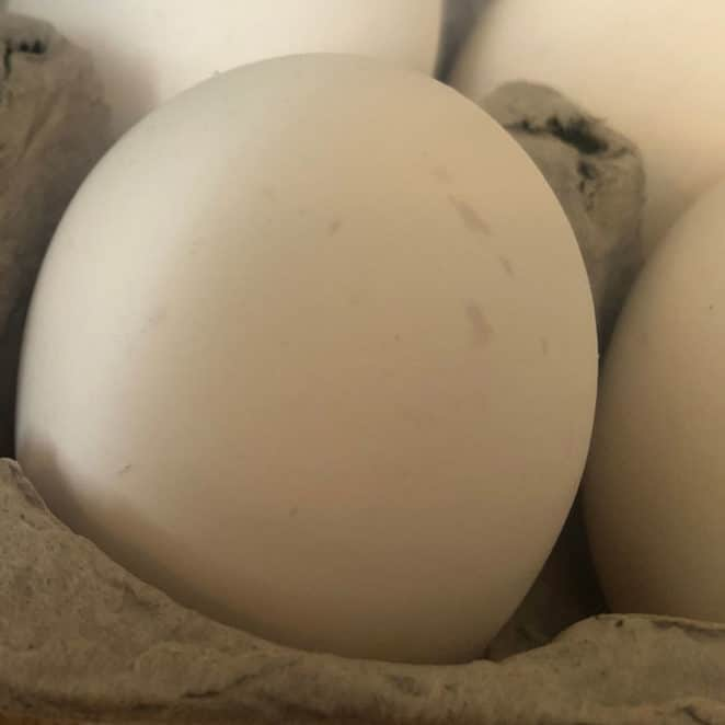 eggshell with mottling or gray smudges and spots