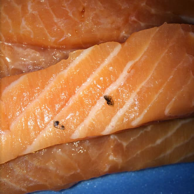 Even though it has scales on it, this salmon filet is still edible