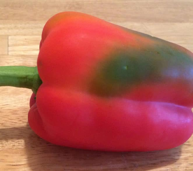 A red pepper with a green patch is still edible
