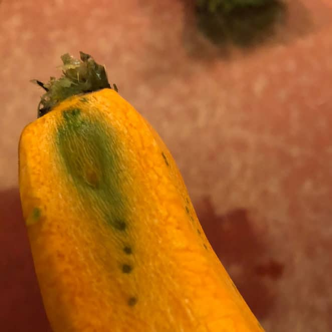 Green dots and lines that appeared when this carrot was peeled