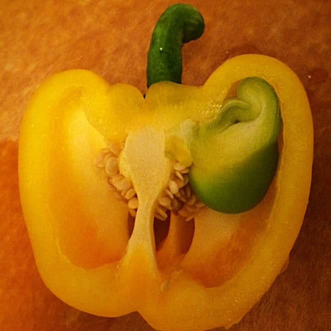 A pepper growing inside another pepper, like this, is edible.