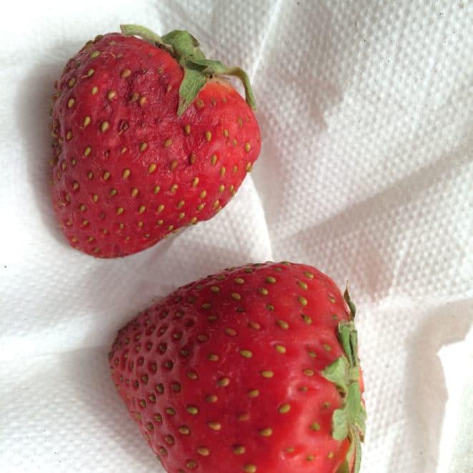 Soft spots on strawberries
