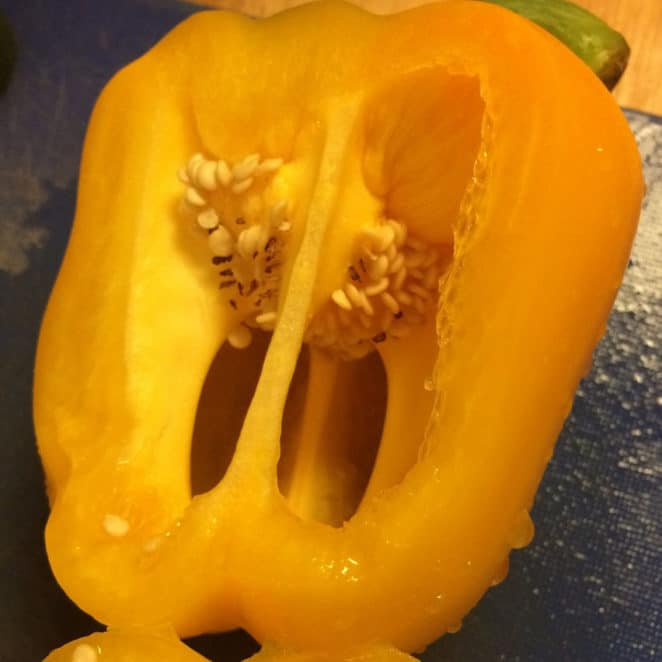 Pepper with dark and shriveled seeds is still edible