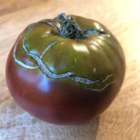 Tomato with concentric scarring is OK to eat