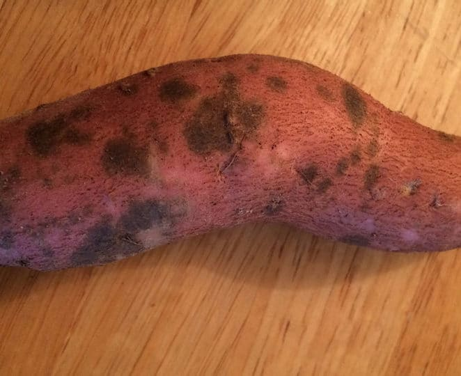 Sweet potatoes with spots that are still edible if peeled