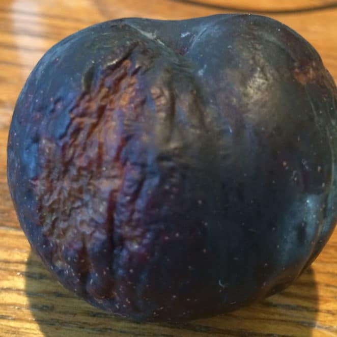 Plum with bumpy rough areas