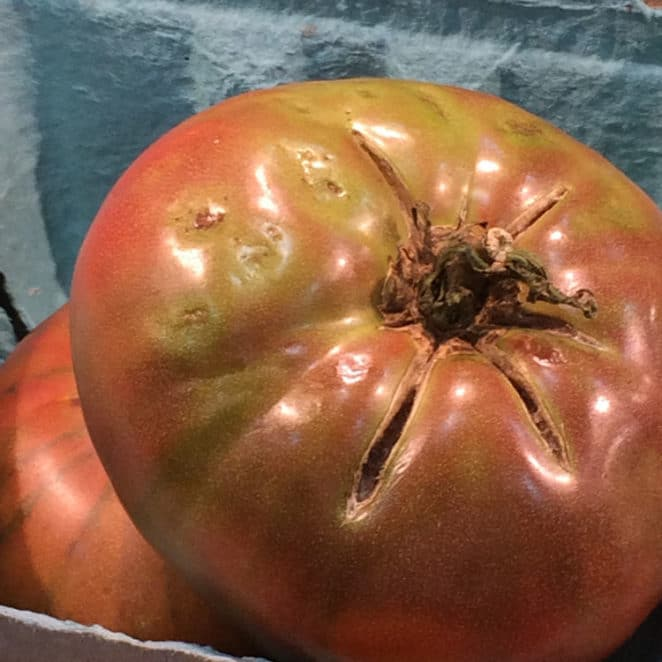 tomato with a cracked top is still edible