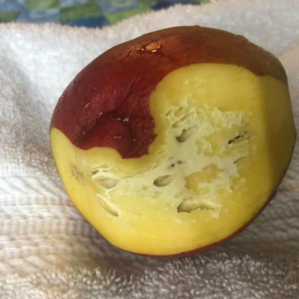A mango with white patches and holes on the inside can still be OK to eat.