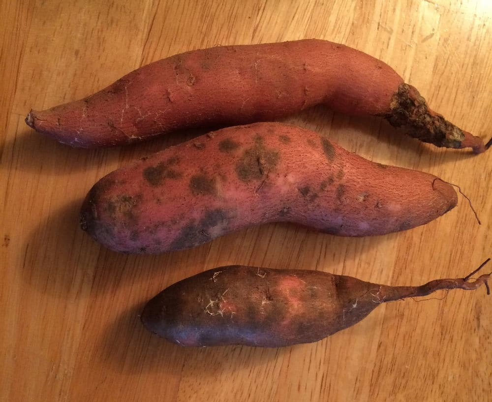Sweet potatoes with spots have scurf