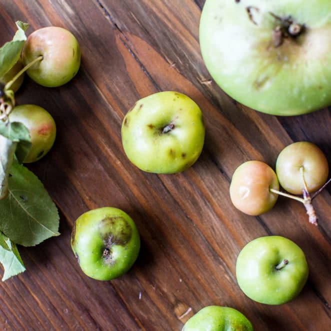 Apples ANXO is about to turn into cider