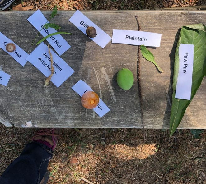 Edible forest finds