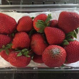 One moldy strawberry