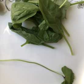 cheeseweed that wound up in a spinach clamshell