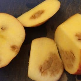 Brown inside apples from carbon dioxide injury